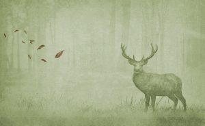 Wallpaper autumn woods 48 animal attitude (3)