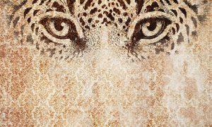 wallpaper felix 62 animal attitude (4)