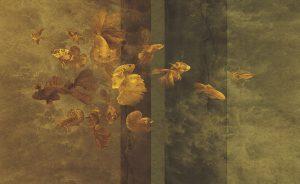 wallpaper golden fish 144 animal attitude (1)