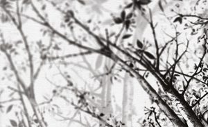 wallpaper in the shadow 55 peeking nature (2)