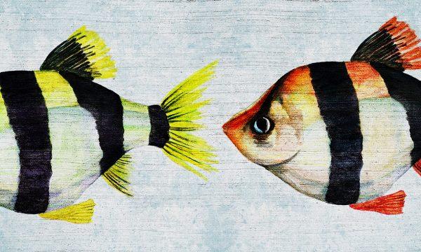 wallpaper maverick 65 animal attitude (1)