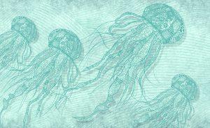 wallpaper pelagia 35 animal attitutde (4)